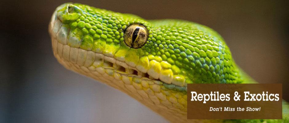 Reptiles & Exotics